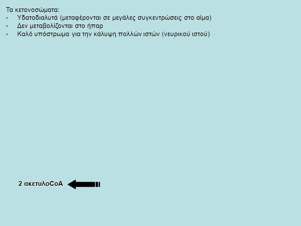 Τα κετονοσώματα: -Υδατοδιαλυτά (μεταφέρονται σε μεγάλες συγκεντρώσεις στο αίμα) -Δεν μεταβολίζονται στο ήπαρ -Καλό υπόστρωμα για την κάλυψη πολλών ιστών (νευρικού ιστού) 2 ακετυλοCoA