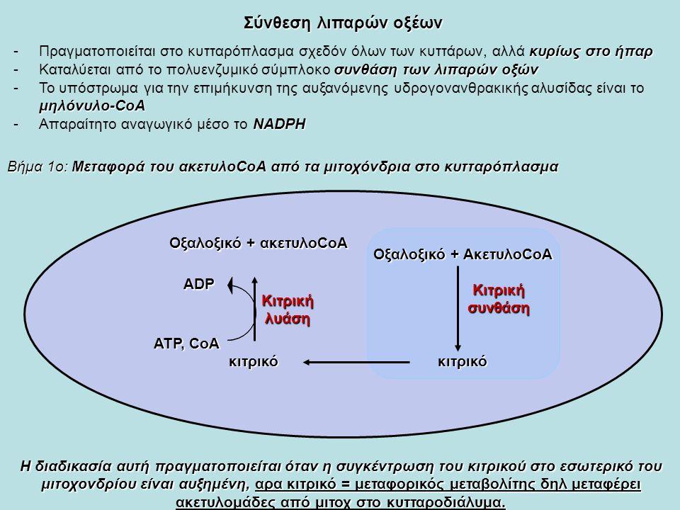 Σύνθεση λιπαρών οξέων κυρίως στο ήπαρ -Πραγματοποιείται στο κυτταρόπλασμα σχεδόν όλων των κυττάρων, αλλά κυρίως στο ήπαρ συνθάση των λιπαρών οξών -Καταλύεται από το πολυενζυμικό σύμπλοκο συνθάση των λιπαρών οξών μηλόνυλο-CoA -Το υπόστρωμα για την επιμήκυνση της αυξανόμενης υδρογονανθρακικής αλυσίδας είναι το μηλόνυλο-CoA NADΡΗ -Απαραίτητο αναγωγικό μέσο το NADΡΗ Βήμα 1ο: Μεταφορά του ακετυλοCoA από τα μιτοχόνδρια στο κυτταρόπλασμα Οξαλοξικό + ΑκετυλοCoA κιτρικόκιτρικό Οξαλοξικό + ακετυλοCoA Κιτρικήσυνθάση Κιτρικήλυάση ΑΤΡ, CoA ADP H διαδικασία αυτή πραγματοποιείται όταν η συγκέντρωση του κιτρικού στο εσωτερικό του μιτοχονδρίου είναι αυξημένη, αρα κιτρικό = μεταφορικός μεταβολίτης δηλ μεταφέρει ακετυλομάδες από μιτοχ στο κυτταροδιάλυμα.