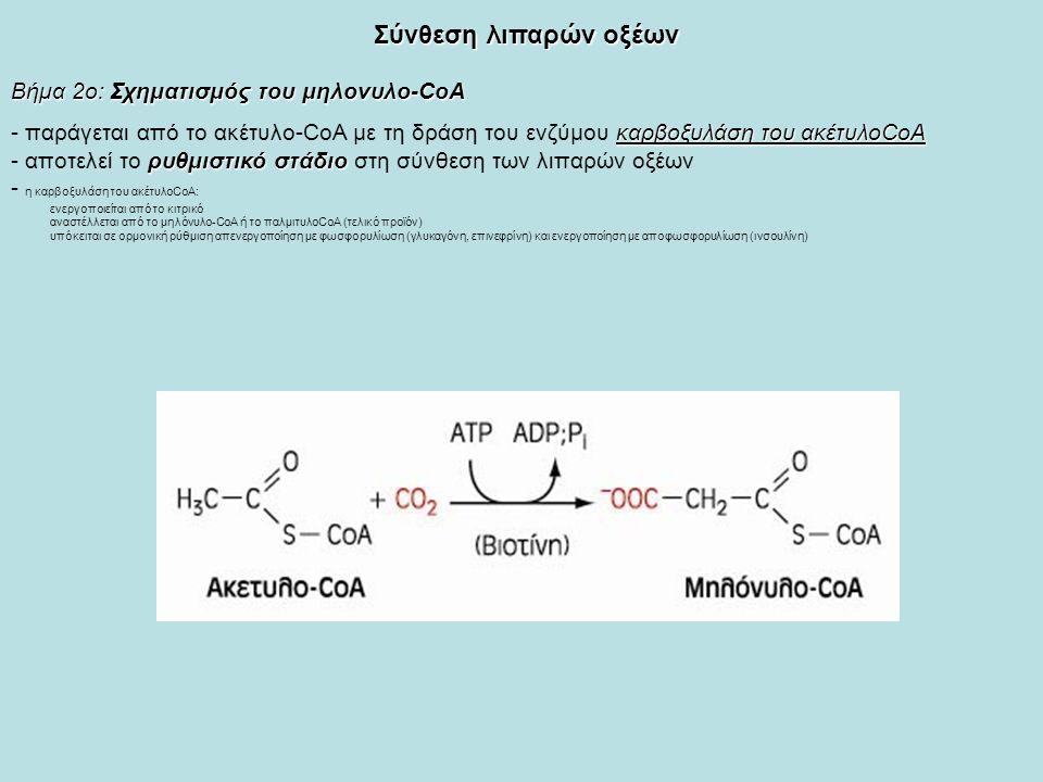 Σύνθεση λιπαρών οξέων Βήμα 2ο: Σχηματισμός του μηλονυλο-CoA καρβοξυλάση του ακέτυλοCoA - παράγεται από το ακέτυλο-CoA με τη δράση του ενζύμου καρβοξυλάση του ακέτυλοCoA ρυθμιστικό στάδιο - αποτελεί το ρυθμιστικό στάδιο στη σύνθεση των λιπαρών οξέων - η καρβοξυλάση του ακέτυλοCoΑ: ενεργοποιείται από το κιτρικό αναστέλλεται από το μηλόνυλο-CoA ή το παλμιτυλοCoA (τελικό προϊόν) υπόκειται σε ορμονική ρύθμιση απενεργοποίηση με φωσφορυλίωση (γλυκαγόνη, επινεφρίνη) και ενεργοποίηση με αποφωσφορυλίωση (ινσουλίνη)