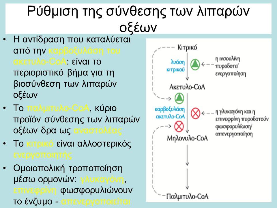 Ρύθμιση της σύνθεσης των λιπαρών οξέων Η αντίδραση που καταλύεται από την καρβοξυλάση του ακετυλο-CoA: είναι το περιοριστικό βήμα για τη βιοσύνθεση των λιπαρών οξέων Το παλμιτυλο-CoA, κύριο προϊόν σύνθεσης των λιπαρών οξέων δρα ως αναστολέας Το κιτρικό είναι αλλοστερικός ενεργοποιητής Ομοιοπολική τροποποίηση μέσω ορμονών: γλυκαγόνη, επινεφρίνη φωσφορυλιώνουν το ένζυμο - απενεργοποιείται