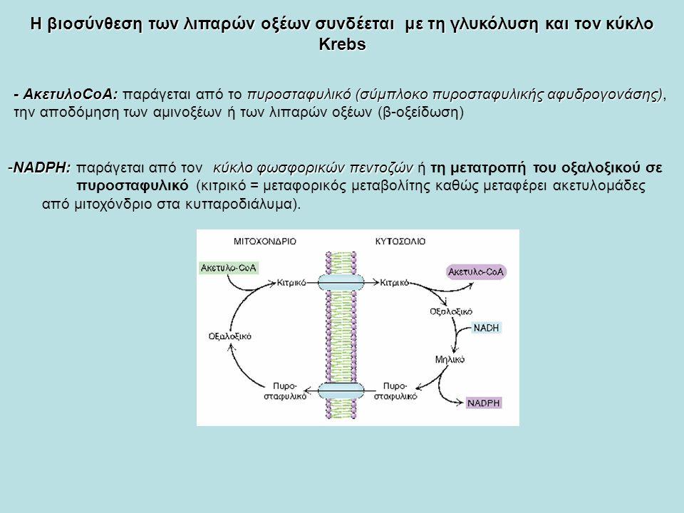 Η βιοσύνθεση των λιπαρών οξέων συνδέεται με τη γλυκόλυση και τον κύκλο Κrebs - ΑκετυλοCoA: πυροσταφυλικό (σύμπλοκο πυροσταφυλικής αφυδρογονάσης) - ΑκετυλοCoA: παράγεται από το πυροσταφυλικό (σύμπλοκο πυροσταφυλικής αφυδρογονάσης), την αποδόμηση των αμινοξέων ή των λιπαρών οξέων (β-οξείδωση) -NADPH: κύκλο φωσφορικών πεντοζών -NADPH: παράγεται από τον κύκλο φωσφορικών πεντοζών ή τη μετατροπή του οξαλοξικού σε πυροσταφυλικό (κιτρικό = μεταφορικός μεταβολίτης καθώς μεταφέρει ακετυλομάδες από μιτοχόνδριο στα κυτταροδιάλυμα).