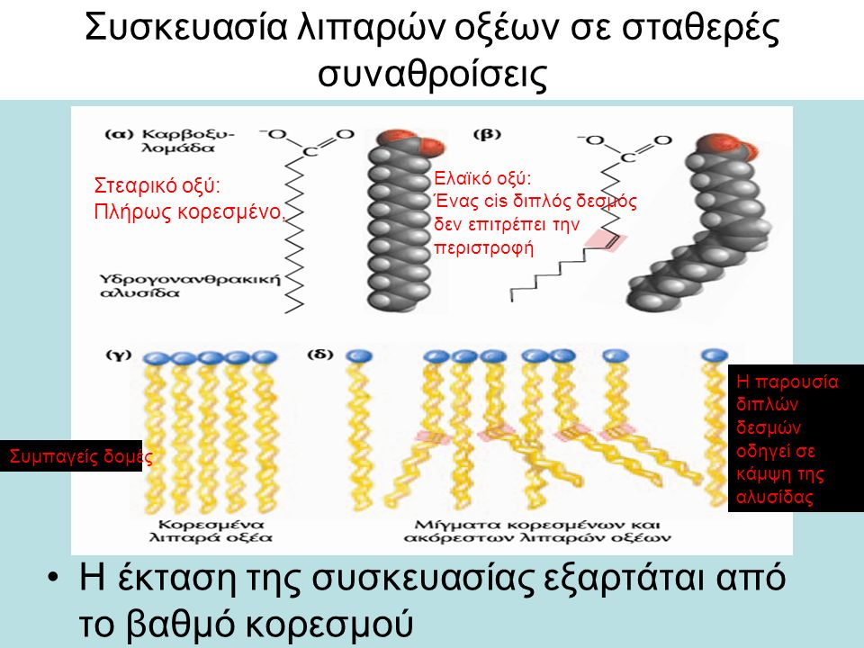 Συσκευασία λιπαρών οξέων σε σταθερές συναθροίσεις Η έκταση της συσκευασίας εξαρτάται από το βαθμό κορεσμού Στεαρικό οξύ: Πλήρως κορεσμένο, Ελαϊκό οξύ: Ένας cis διπλός δεσμός δεν επιτρέπει την περιστροφή Συμπαγείς δομές Η παρουσία διπλών δεσμών οδηγεί σε κάμψη της αλυσίδας