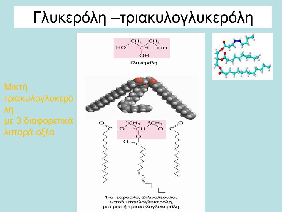 Οι τριακυλογλυκερόλες παρέχουν αποθηκευμένη ενέργεια και μόνωση Λιποσταγονίδια: αποθήκες μεταβολικών καυσίμων Πλεονεκτήματα: 1) η οξείδωση των λιπαρών οξέων αποδίδει διπλάσια και πλέον ενέργεια από την οξείδωση των υδρογονανθράκων (π.χ.