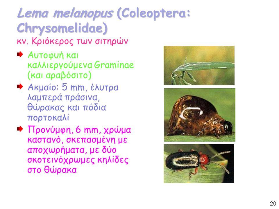 Lema melanopus (Coleoptera: Chrysomelidae) Lema melanopus (Coleoptera: Chrysomelidae) κν.
