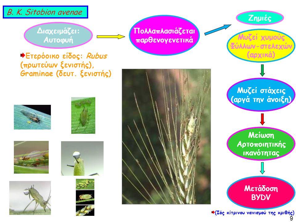 Διαχειμάζει: Αυτοφυή Πολλαπλασιάζεται παρθενογενετικά Ετερόοικο είδος: Rubus (πρωτεύων ξενιστής), Graminae (δευτ.