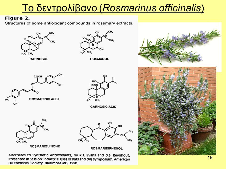 19 Το δεντρολίβανο (Rosmarinus officinalis)