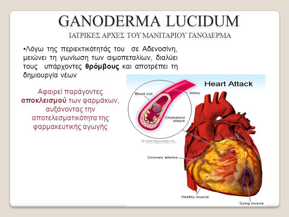 Λόγω της περιεκτικότητάς του σε Αδενοσίνη, μειώνει τη γωνίωση των αιμοπεταλίων, διαλύει τους υπάρχοντες θρόμβους και αποτρέπει τη δημιουργία νέων GANODERMA LUCIDUM ΙΑΤΡΙΚΕΣ ΑΡΧΕΣ ΤΟΥ ΜΑΝΙΤΑΡΙΟΥ ΓΑΝΟΔΕΡΜΑ Αφαιρεί παράγοντες αποκλεισμού των φαρμάκων, αυξάνοντας την αποτελεσματικότητα της φαρμακευτικής αγωγής
