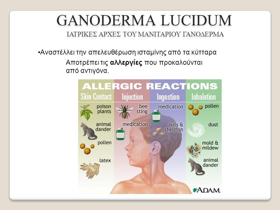 GANODERMA LUCIDUM ΙΑΤΡΙΚΕΣ ΑΡΧΕΣ ΤΟΥ ΜΑΝΙΤΑΡΙΟΥ ΓΑΝΟΔΕΡΜΑ Αναστέλλει την απελευθέρωση ισταμίνης από τα κύτταρα Αποτρέπει τις αλλεργίες που προκαλούνται από αντιγόνα.