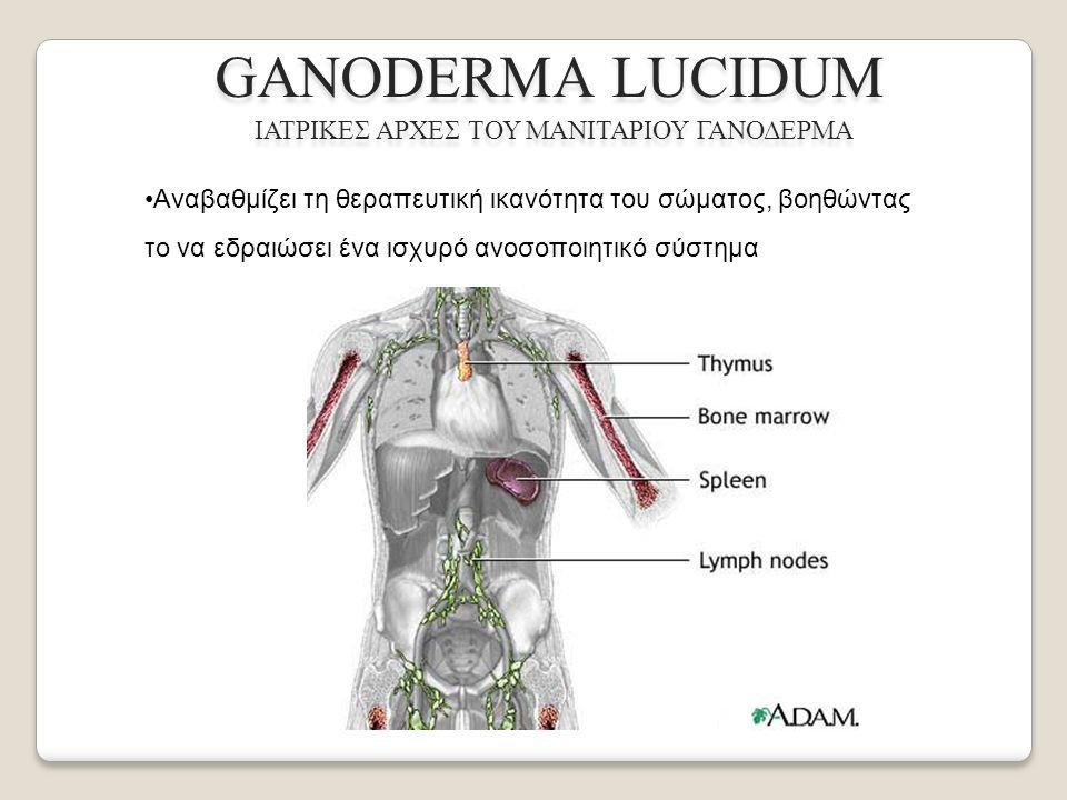 Αναβαθμίζει τη θεραπευτική ικανότητα του σώματος, βοηθώντας το να εδραιώσει ένα ισχυρό ανοσοποιητικό σύστημα GANODERMA LUCIDUM ΙΑΤΡΙΚΕΣ ΑΡΧΕΣ ΤΟΥ ΜΑΝΙΤΑΡΙΟΥ ΓΑΝΟΔΕΡΜΑ