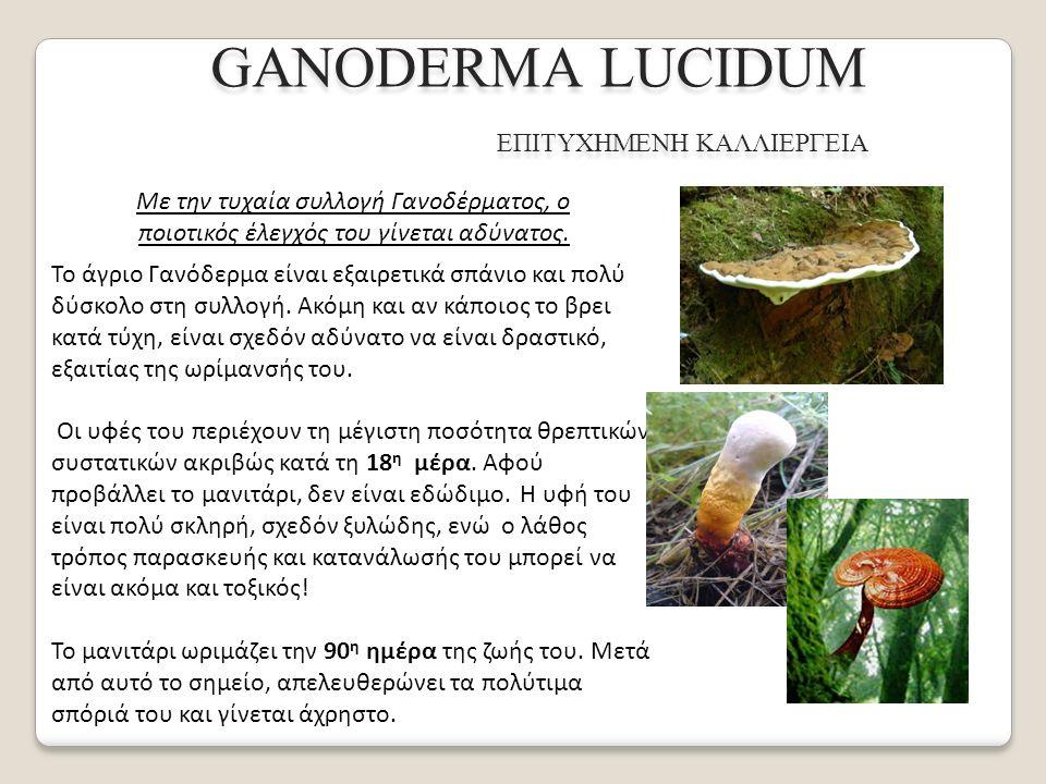 GANODERMA LUCIDUM ΕΠΙΤΥΧΗΜΕΝΗ ΚΑΛΛΙΕΡΓΕΙΑ Το 1970, ο Yukio Naoi, τεχνικός του Foodstuff Scientific Recearch Institute του Πανεπιστημίου του Κιότο, στην Ιαπωνία, ανακάλυψε μια μέθοδο καλλιέργειας που ονόμασε «Μέθοδο Καλλιέργειας με Διαχωρισμό Σπορίων».
