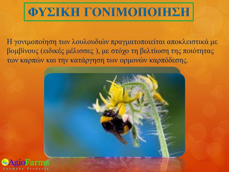 Η γονιμοποίηση των λουλουδιών πραγματοποιείται αποκλειστικά με βομβίνους ( ειδικές μέλισσες ), με στόχο τη βελτίωση της ποιότητας των καρπών και την κατάργηση των ορμονών καρπόδεσης.