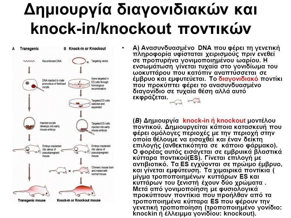 Δημιουργία διαγονιδιακών και knock-in/knockout ποντικών Α) Ανασυνδυασμένο DNA που φέρει τη γενετική πληροφορία υφίσταται χειρισμούς πριν ενεθεί σε προπυρήνα γονιμοποιημένου ωαρίου.