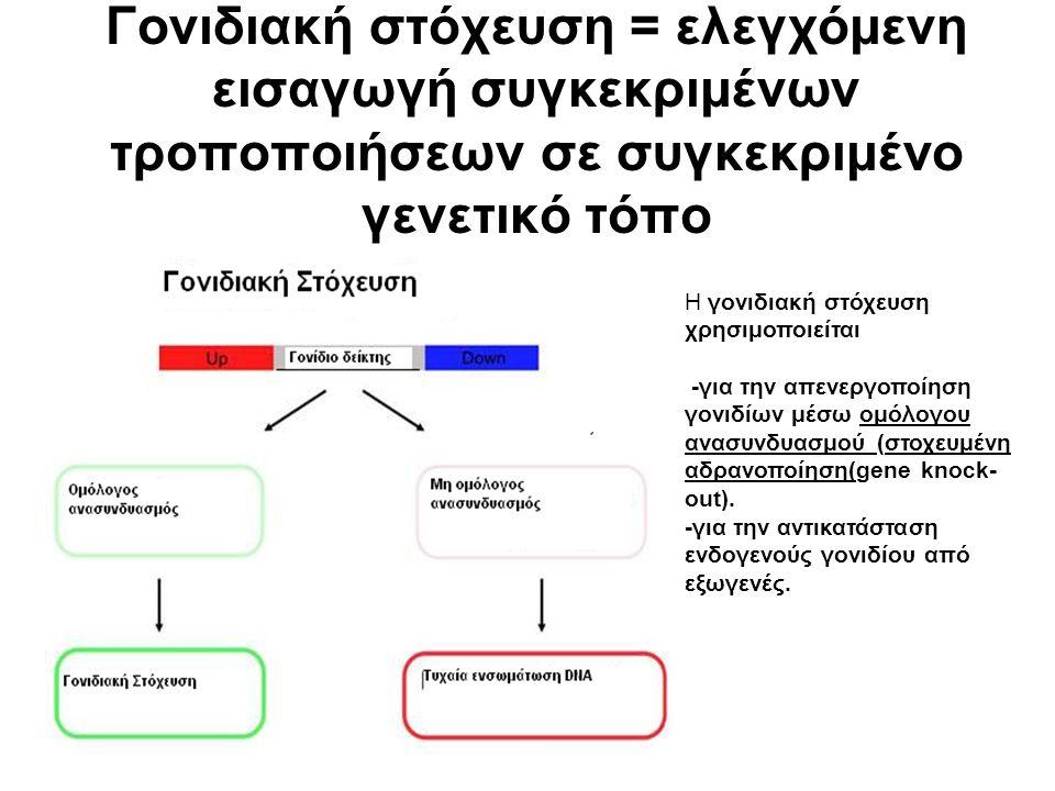 Γονιδιακή στόχευση = ελεγχόμενη εισαγωγή συγκεκριμένων τροποποιήσεων σε συγκεκριμένο γενετικό τόπο Η γονιδιακή στόχευση χρησιμοποιείται -για την απενεργοποίηση γονιδίων μέσω ομόλογου ανασυνδυασμού (στοχευμένη αδρανοποίηση(gene knock- out).