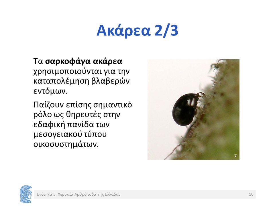 Ακάρεα 2/3 Τα σαρκοφάγα ακάρεα χρησιμοποιούνται για την καταπολέμηση βλαβερών εντόμων.