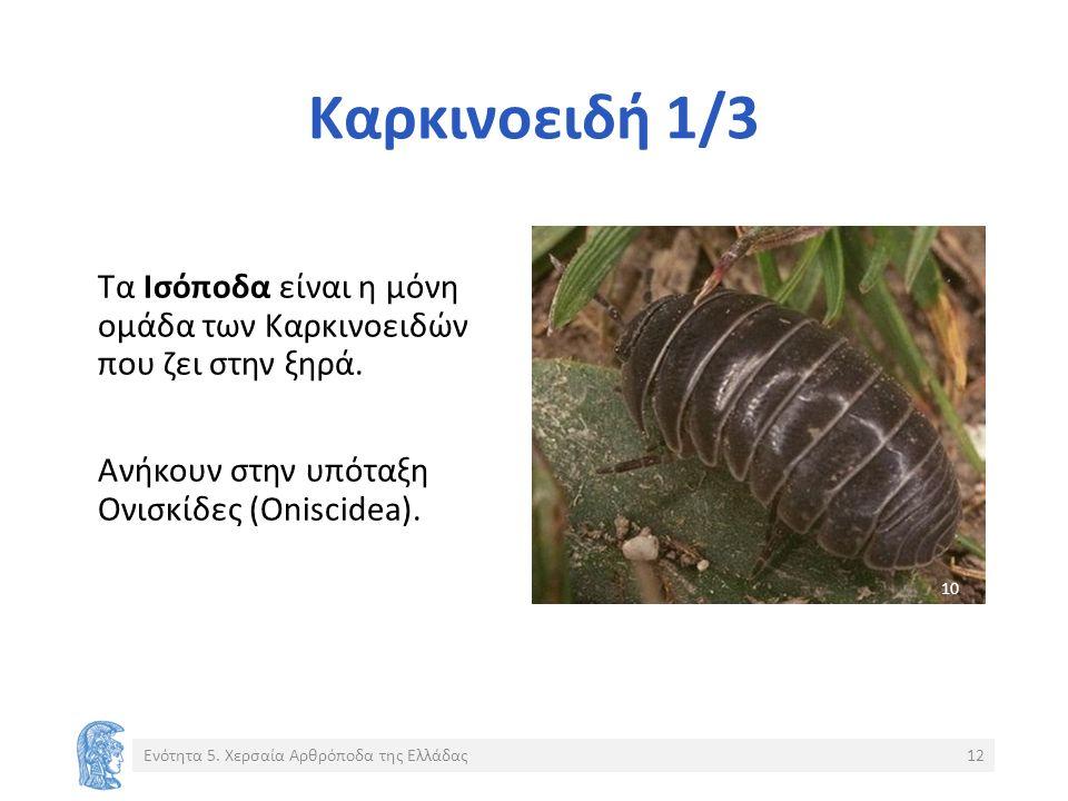 Καρκινοειδή 1/3 Τα Ισόποδα είναι η μόνη ομάδα των Καρκινοειδών που ζει στην ξηρά.