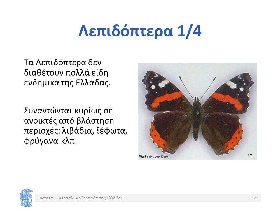 Λεπιδόπτερα 1/4 Τα Λεπιδόπτερα δεν διαθέτουν πολλά είδη ενδημικά της Ελλάδας.