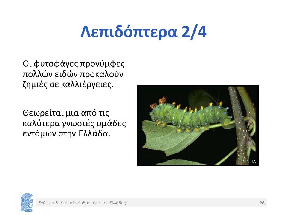 Λεπιδόπτερα 2/4 Οι φυτοφάγες προνύμφες πολλών ειδών προκαλούν ζημιές σε καλλιέργειες.