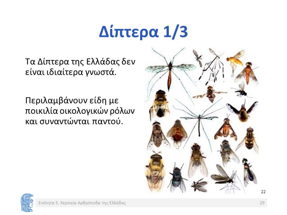 Δίπτερα 1/3 Τα Δίπτερα της Ελλάδας δεν είναι ιδιαίτερα γνωστά.