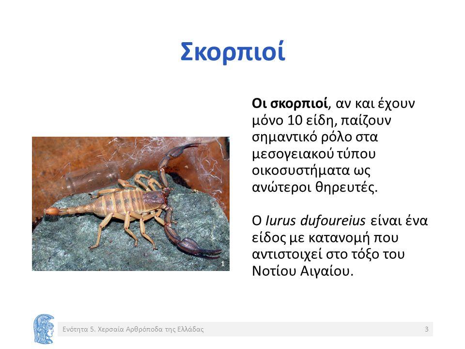 Σκορπιοί Οι σκορπιοί, αν και έχουν μόνο 10 είδη, παίζουν σημαντικό ρόλο στα μεσογειακού τύπου οικοσυστήματα ως ανώτεροι θηρευτές.