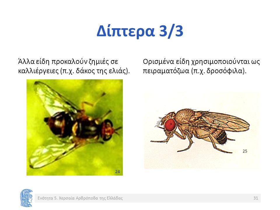 Δίπτερα 3/3 Άλλα είδη προκαλούν ζημιές σε καλλιέργειες (π.χ.