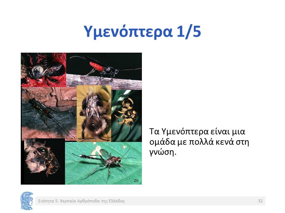 Υμενόπτερα 1/5 Τα Υμενόπτερα είναι μια ομάδα με πολλά κενά στη γνώση.