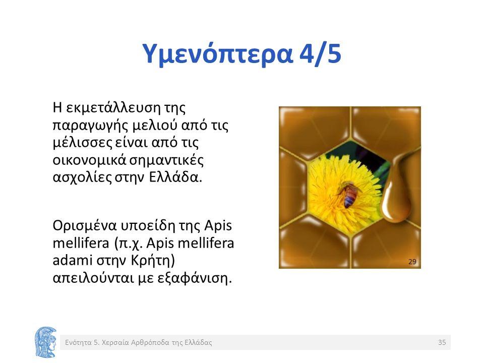 Υμενόπτερα 4/5 Η εκμετάλλευση της παραγωγής μελιού από τις μέλισσες είναι από τις οικονομικά σημαντικές ασχολίες στην Ελλάδα.