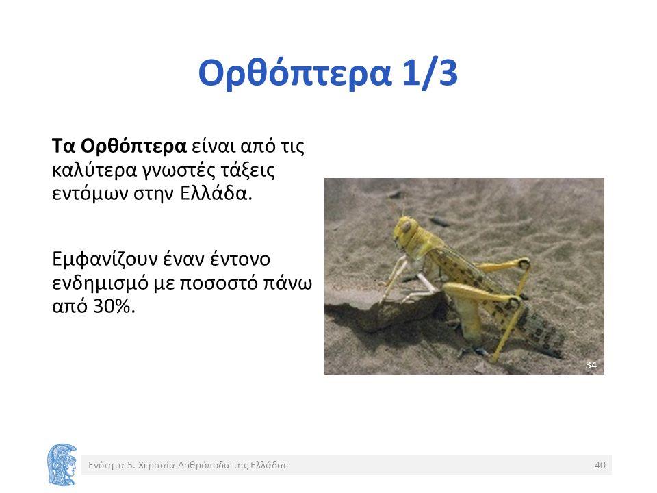 Ορθόπτερα 1/3 Τα Ορθόπτερα είναι από τις καλύτερα γνωστές τάξεις εντόμων στην Ελλάδα.