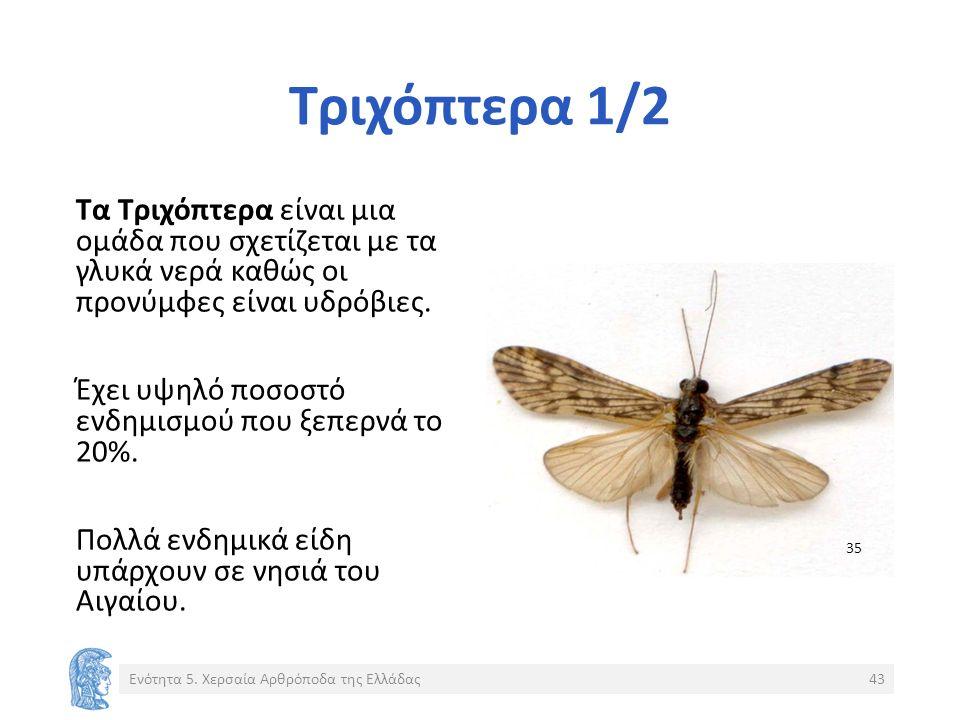 Τριχόπτερα 1/2 Τα Τριχόπτερα είναι μια ομάδα που σχετίζεται με τα γλυκά νερά καθώς οι προνύμφες είναι υδρόβιες.