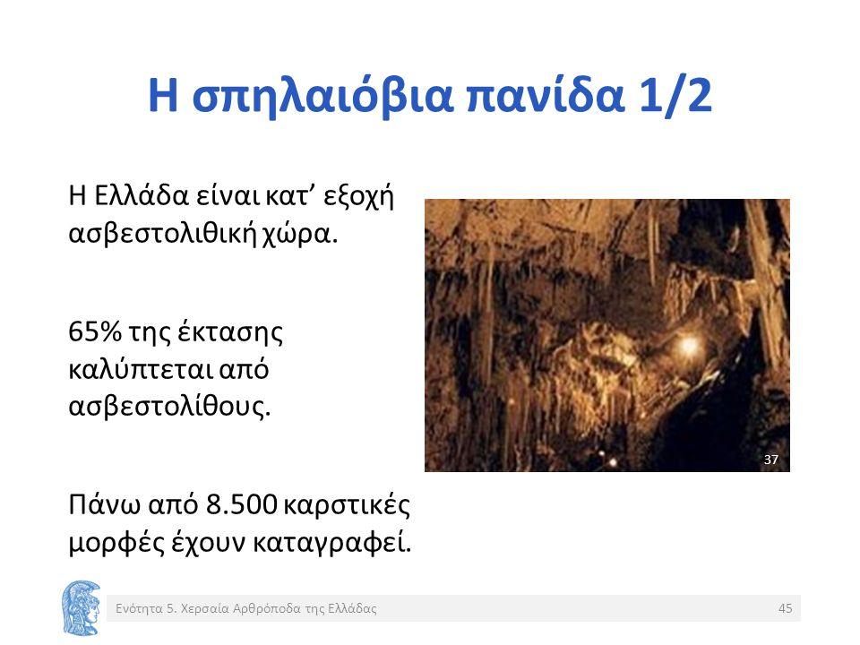 Η σπηλαιόβια πανίδα 1/2 Η Ελλάδα είναι κατ' εξοχή ασβεστολιθική χώρα.