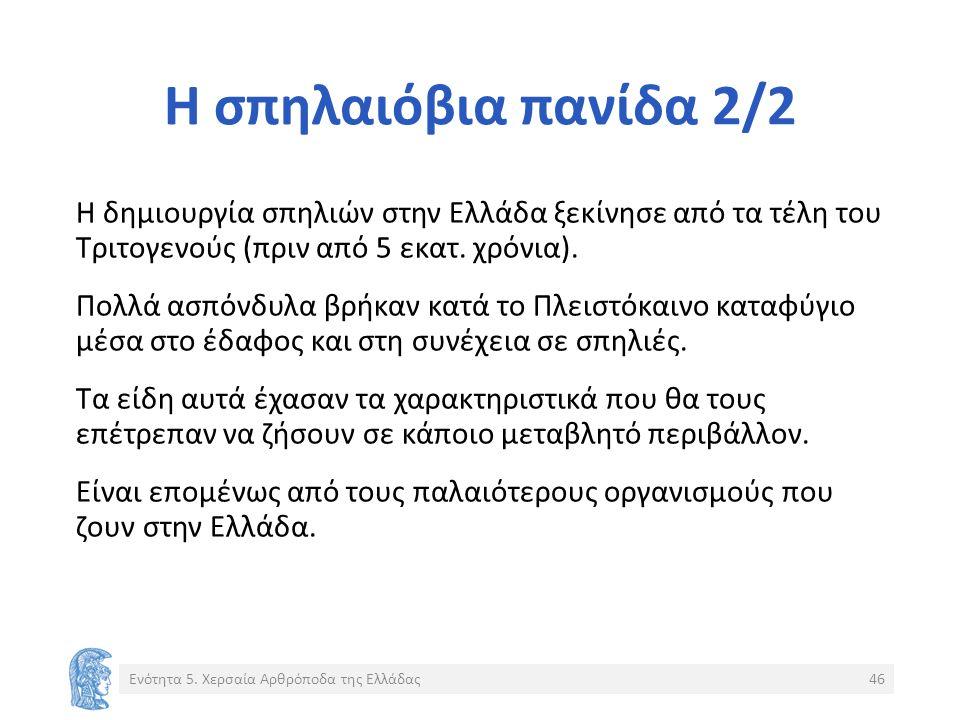 Η σπηλαιόβια πανίδα 2/2 Η δημιουργία σπηλιών στην Ελλάδα ξεκίνησε από τα τέλη του Τριτογενούς (πριν από 5 εκατ.