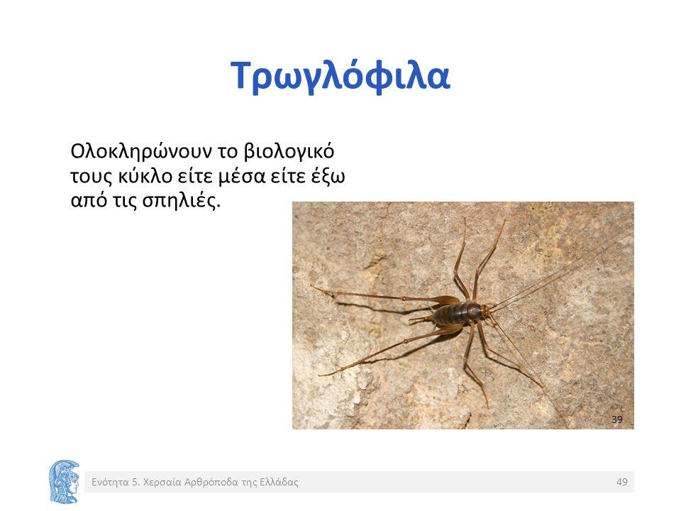 Τρωγλόφιλα Ολοκληρώνουν το βιολογικό τους κύκλο είτε μέσα είτε έξω από τις σπηλιές.