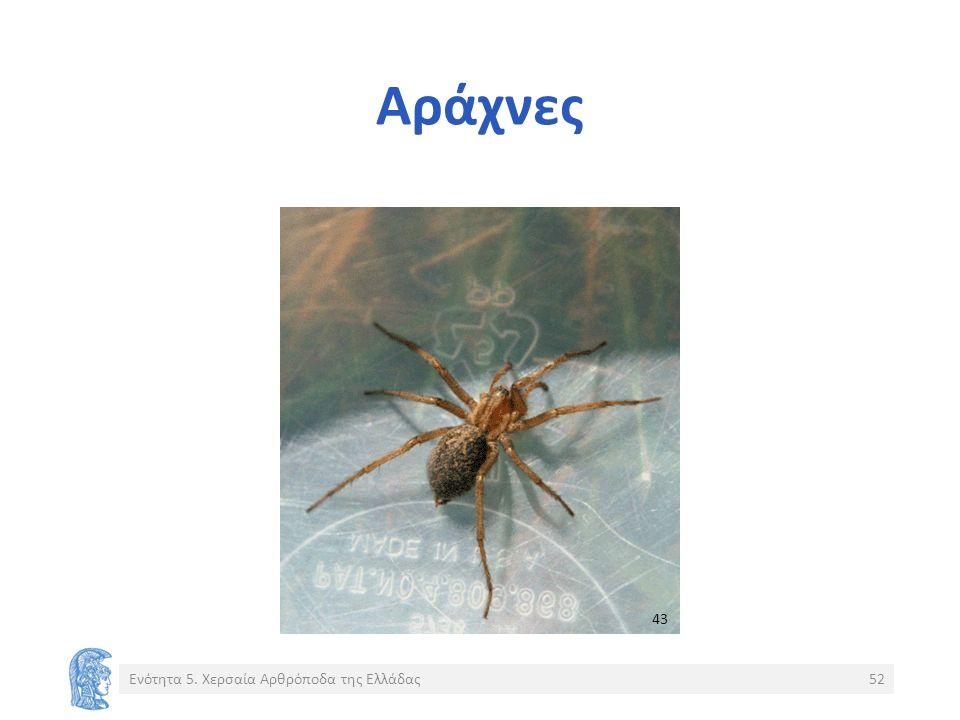 Αράχνες Ενότητα 5. Χερσαία Αρθρόποδα της Ελλάδας52 43