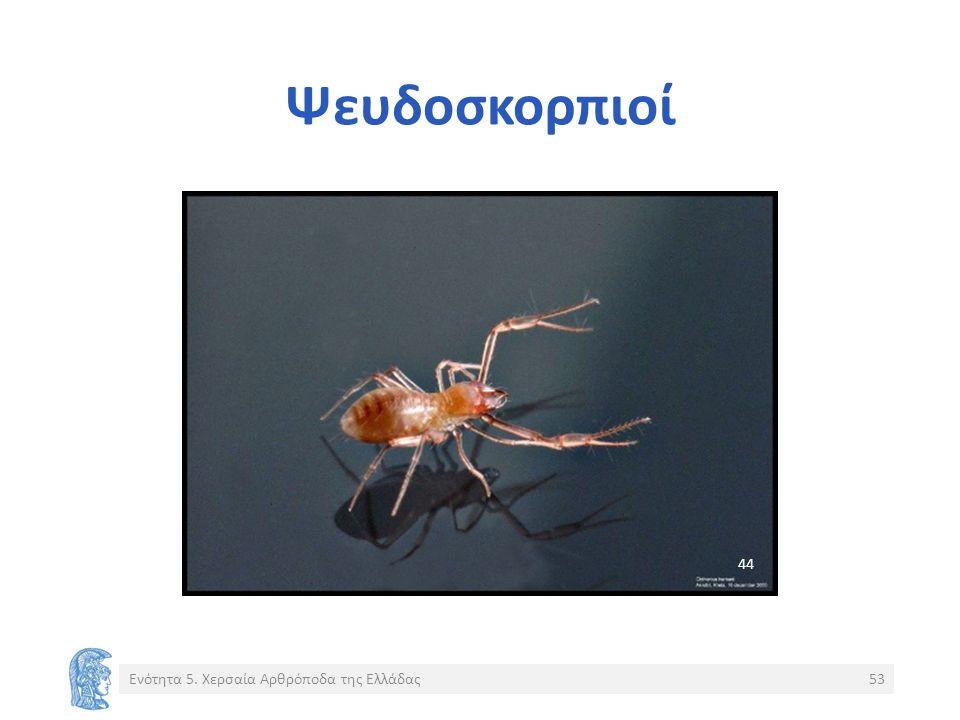 Ψευδοσκορπιοί Ενότητα 5. Χερσαία Αρθρόποδα της Ελλάδας53 44