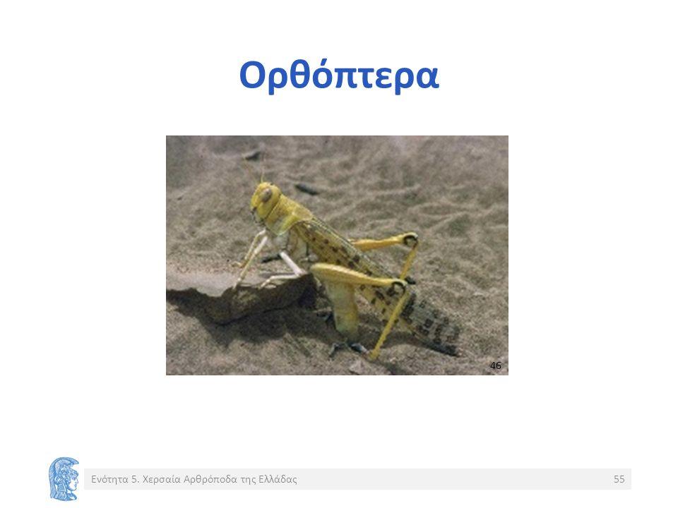 Ορθόπτερα Ενότητα 5. Χερσαία Αρθρόποδα της Ελλάδας55 4646