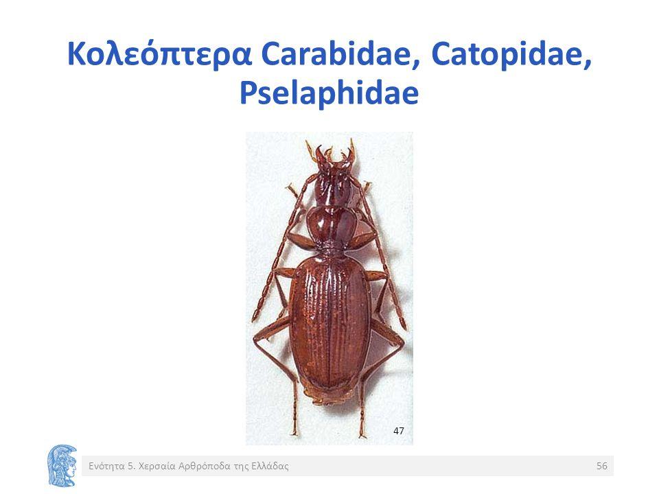 Κολεόπτερα Carabidae, Catopidae, Pselaphidae Ενότητα 5. Χερσαία Αρθρόποδα της Ελλάδας56 47