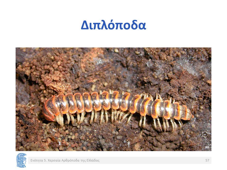 Διπλόποδα Ενότητα 5. Χερσαία Αρθρόποδα της Ελλάδας57 48