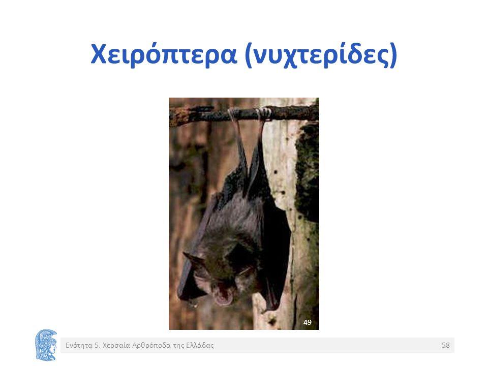 Χειρόπτερα (νυχτερίδες) Ενότητα 5. Χερσαία Αρθρόποδα της Ελλάδας58 4949