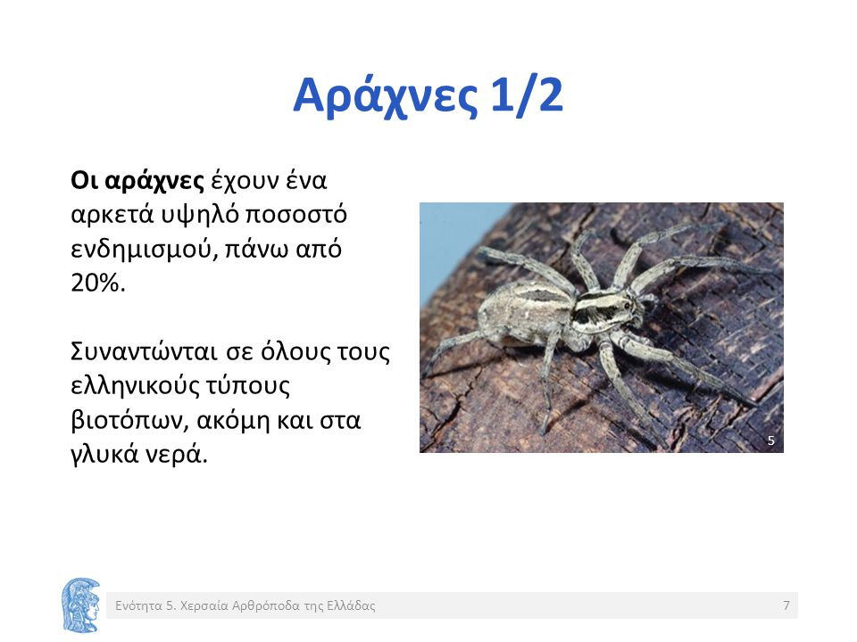 Αράχνες 1/2 Οι αράχνες έχουν ένα αρκετά υψηλό ποσοστό ενδημισμού, πάνω από 20%.