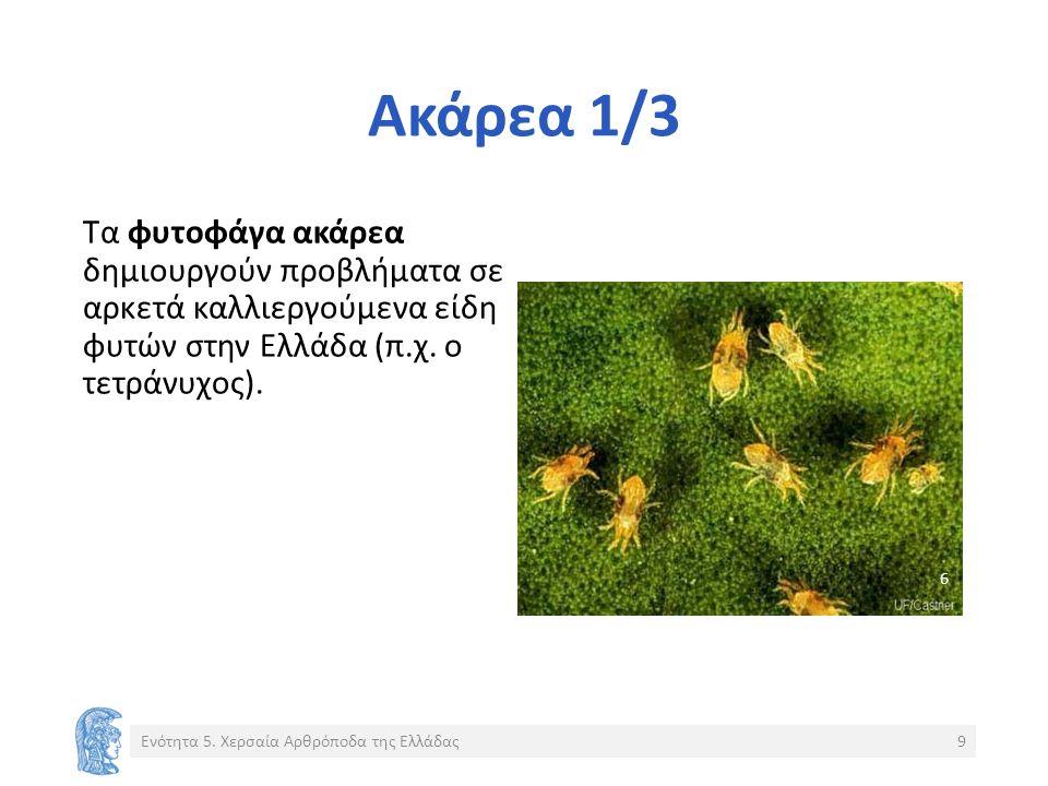 Ακάρεα 1/3 Τα φυτοφάγα ακάρεα δημιουργούν προβλήματα σε αρκετά καλλιεργούμενα είδη φυτών στην Ελλάδα (π.χ.
