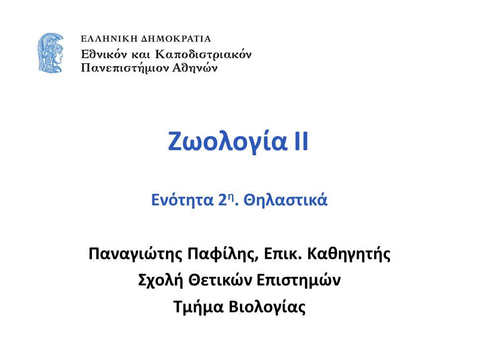 Ζωολογία ΙΙ Ενότητα 2 η. Θηλαστικά Παναγιώτης Παφίλης, Επικ.