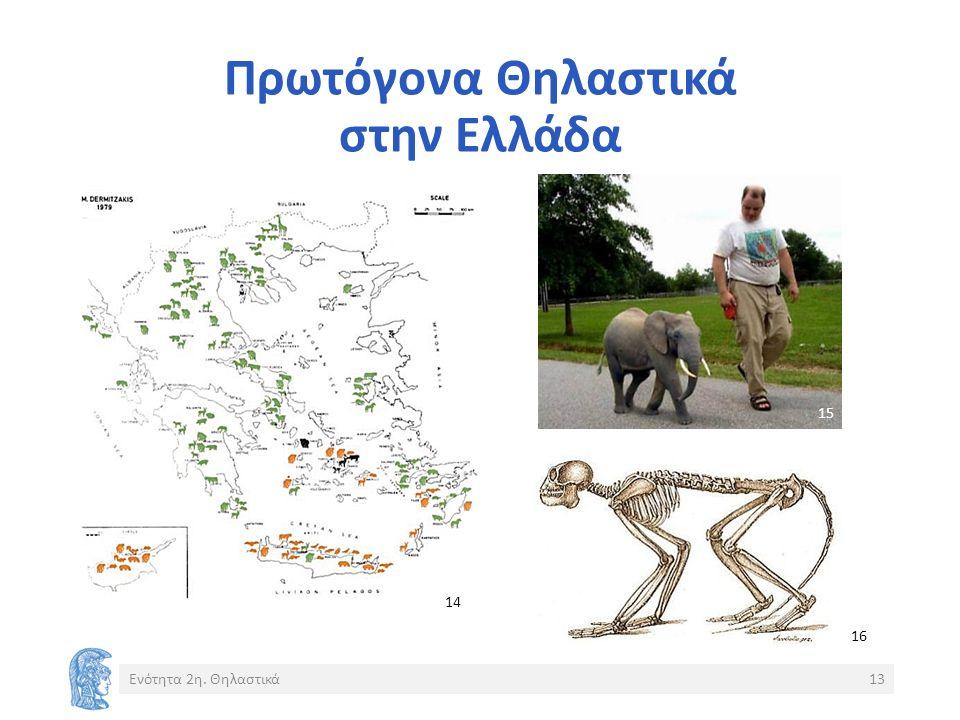 Πρωτόγονα Θηλαστικά στην Ελλάδα Ενότητα 2η. Θηλαστικά13 14 15 16