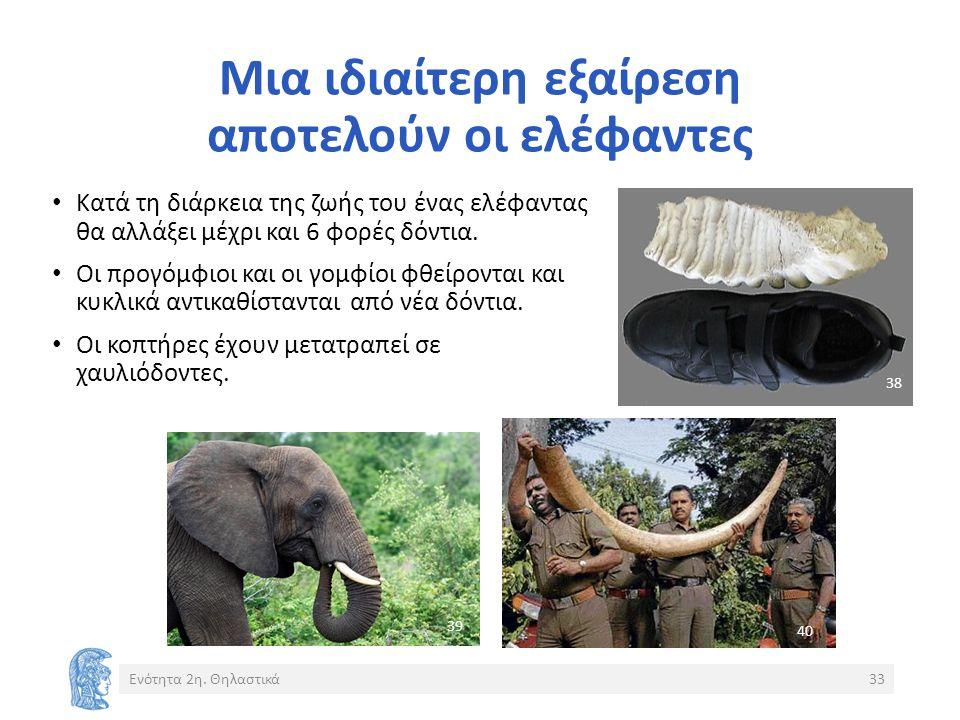 Μια ιδιαίτερη εξαίρεση αποτελούν οι ελέφαντες Ενότητα 2η.