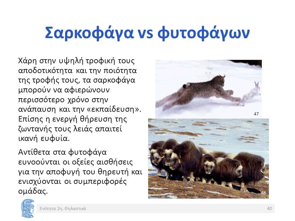 Σαρκοφάγα vs φυτοφάγων Ενότητα 2η.