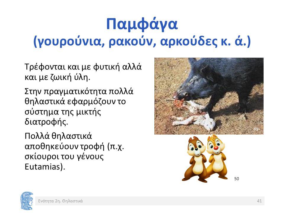 Παμφάγα (γουρούνια, ρακούν, αρκούδες κ. ά.) Ενότητα 2η.