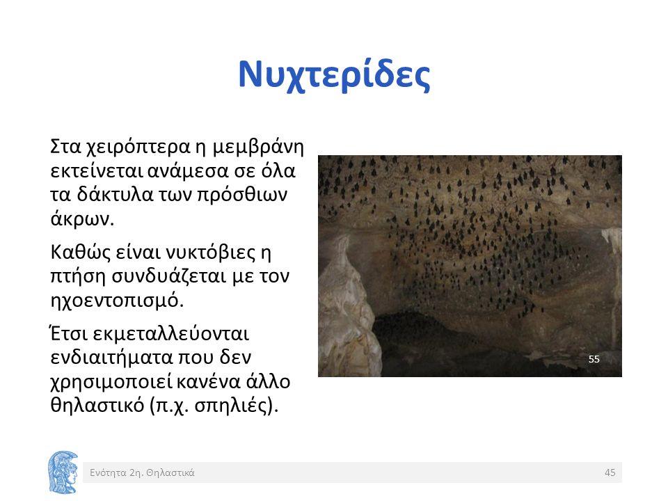 Νυχτερίδες Ενότητα 2η.