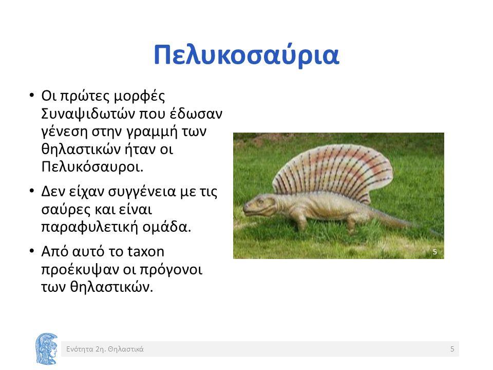 Πελυκοσαύρια Ενότητα 2η.