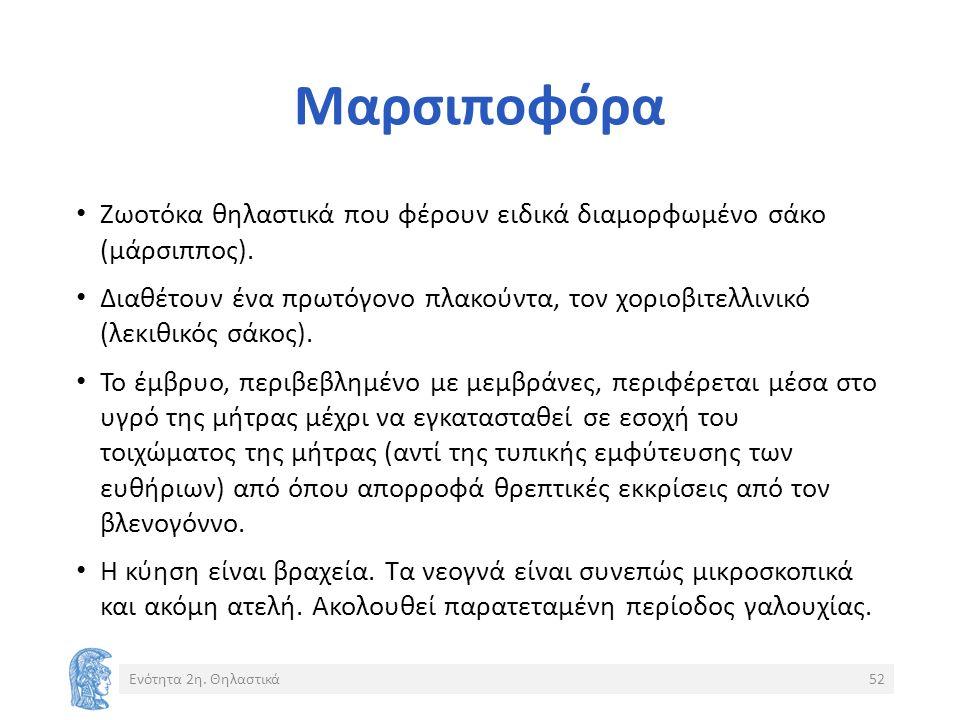 Μαρσιποφόρα Ζωοτόκα θηλαστικά που φέρουν ειδικά διαμορφωμένο σάκο (μάρσιππος).