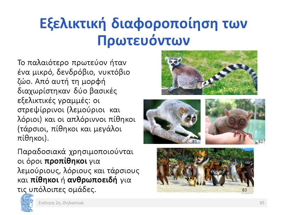 Εξελικτική διαφοροποίηση των Πρωτευόντων Ενότητα 2η.