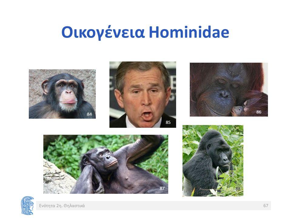 Οικογένεια Hominidae Ενότητα 2η. Θηλαστικά67 8484 8585 8686 8787 8