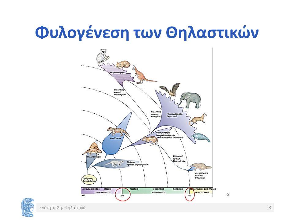 Φυλογένεση των Θηλαστικών Ενότητα 2η. Θηλαστικά8 8